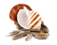 Marine Still Life. Stock Images
