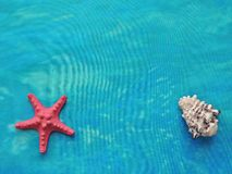 Marine textile composition with the starfish and shell. Royalty Free Stock Photos