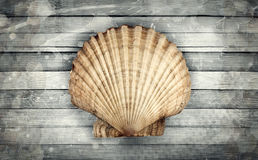 Marine theme. Abstract marine composition of big scallopon a wooden background Stock Photos