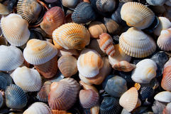 Marine theme background with seashells over sand close-up Stock Images