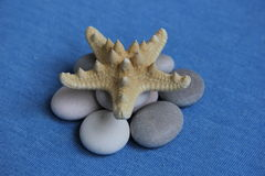 Marine theme. Variations with stones gems starfish can be used as a screensaver Stock Photography