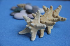 Marine theme. Variations with stones gems starfish can be used as a screensaver Royalty Free Stock Photo