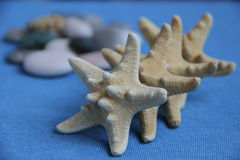 Marine theme. Variations with stones gems starfish can be used as a screensaver Stock Photos