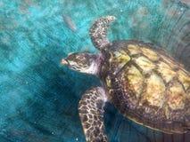 Marine tortoise royalty free stock photos