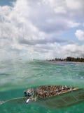 Marine turtle - Sea surface Royalty Free Stock Photography
