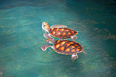Marine turtles royalty free stock photos