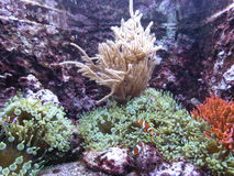 Marine vegetation. Fishes, marine vegetation under water, water world Royalty Free Stock Image