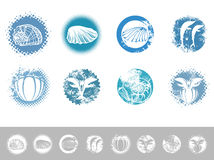 Marine Vintage Design Set illustration stock