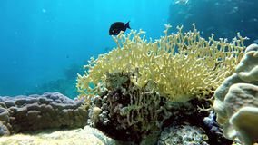 Marine, Water, Underwater,. Coral reef. Exotic fishes. The beauty of the underwater world. Life in the ocean. Diving on a tropical reef. Submarine life. Clear stock video footage