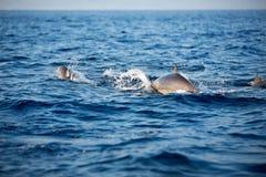 Marine wildlife background stock photo
