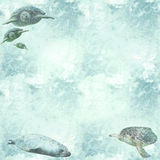 Marine wildlife with turtles wallpaper. Aquatic texture with swimming turtles and a seal royalty free stock images