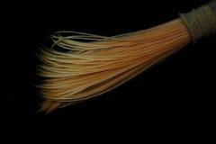 Marine worm Stock Photo