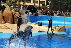 Marineland Palafolls Lloret De Mar Obraz Royalty Free