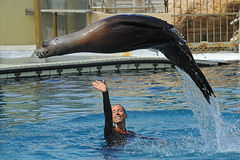 Marineland park Stock Photo
