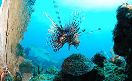 Marinelebensdauer auf Ozeanriff lizenzfreie stockfotos
