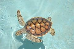 Marinelifemammals de los reptiles de la vida de las tortugas de la tortuga Fotos de archivo