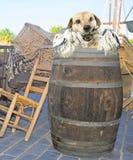 Marinero Dog foto de archivo libre de regalías