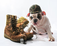 Marine Bulldog Royalty Free Stock Photos