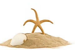 Marinestern und Seashell auf Sand Lizenzfreie Stockbilder