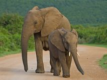 Marion Barrie Elephants Stock Photos