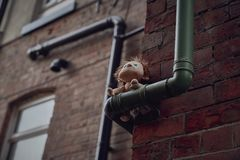 Marionnette dans la rue photo stock