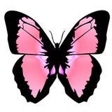 Mariposa 12 stock de ilustración
