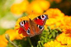 Mariposa Fotografía de archivo