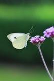 Mariposa Foto de archivo