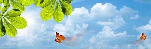 Mariposa. Foto de archivo