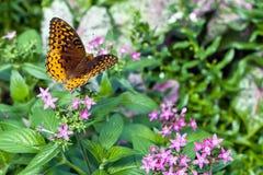 Mariposa imágenes de archivo libres de regalías