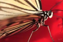 Mariposa 6 fotografía de archivo libre de regalías