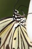 Mariposa 7 imagenes de archivo