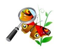 Mariposa. Fotografía de archivo