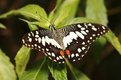 Mariposa 2 imagenes de archivo