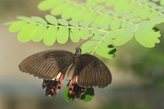 Mariposa 3 imagenes de archivo