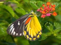 Mariposa Fotos de archivo