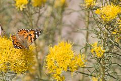 Mariposa 5 foto de archivo