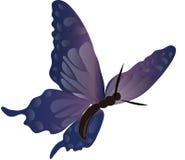 Mariposa 3 Fotografía de archivo