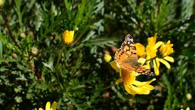 Mariposa almacen de video