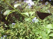 Mariposa Fotografía de archivo libre de regalías