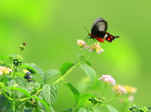 Mariposa Foto de archivo libre de regalías