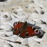 Mariposa Imagen de archivo libre de regalías