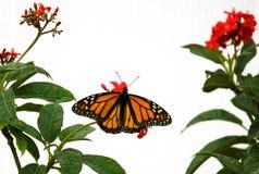 Mariposa 9 Fotos de archivo