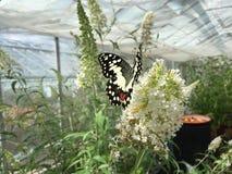 Mariposa Foto de Stock