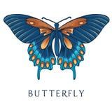 Mariposa abstracta Fotos de archivo libres de regalías
