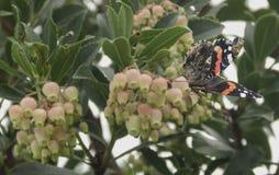Mariposa agradable en un árbol del flowe Foto de archivo