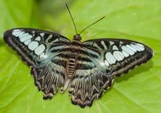 Mariposa aislada Fotografía de archivo