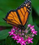 Mariposa aislada Fotos de archivo