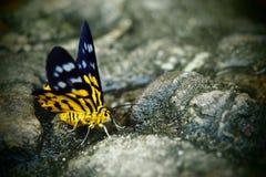 mariposa amarilla Imagen de archivo libre de regalías