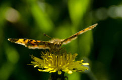 Mariposa amarilla en la flor Foto de archivo